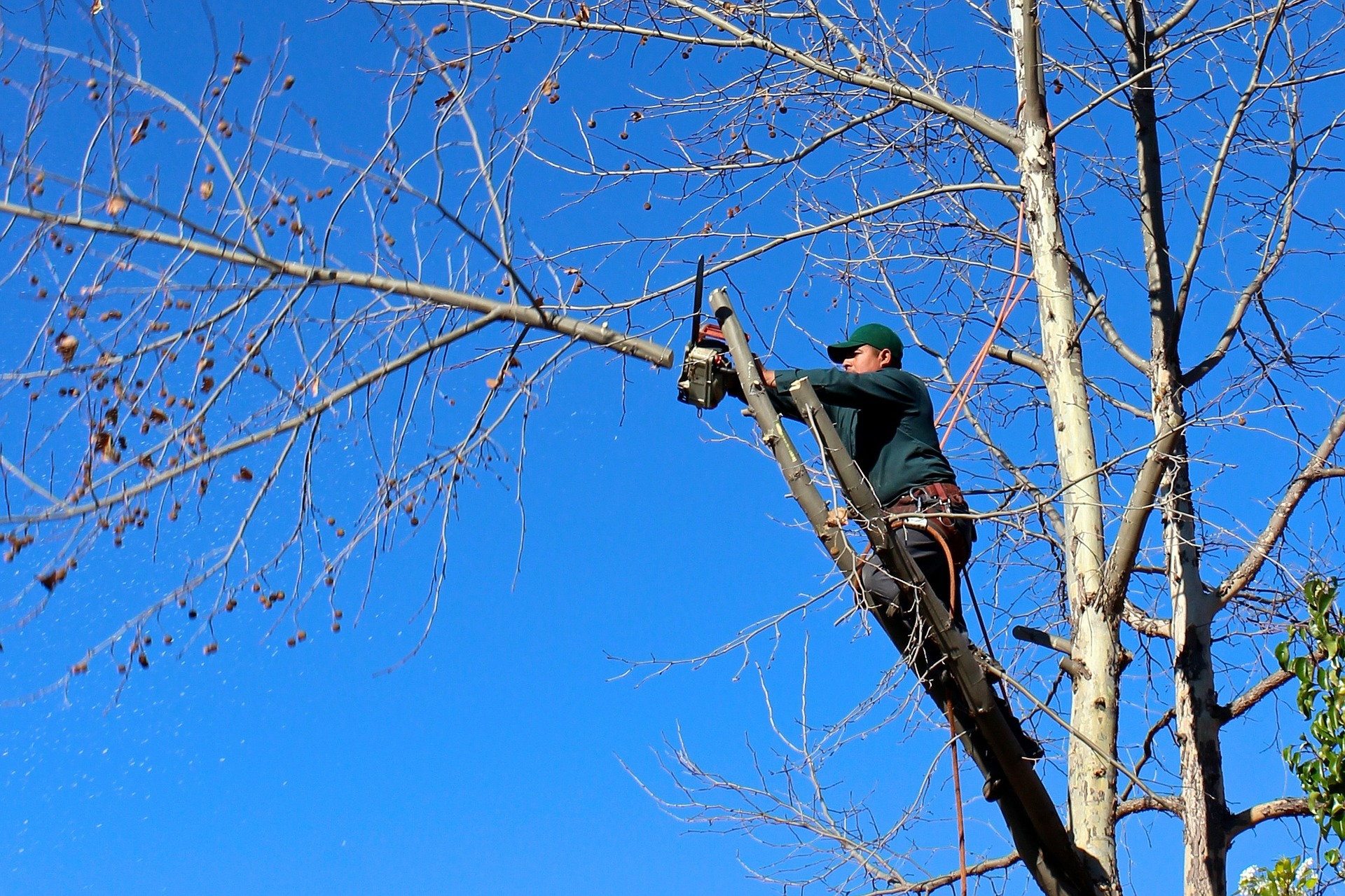 Why is Tree Pruning Important?