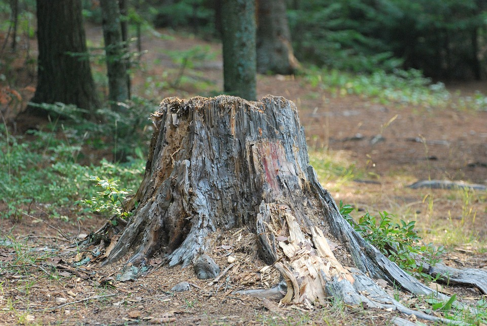 Burying Stumps: What you Should Know?