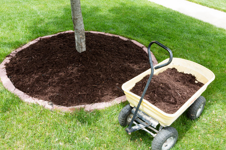 mulch around trees