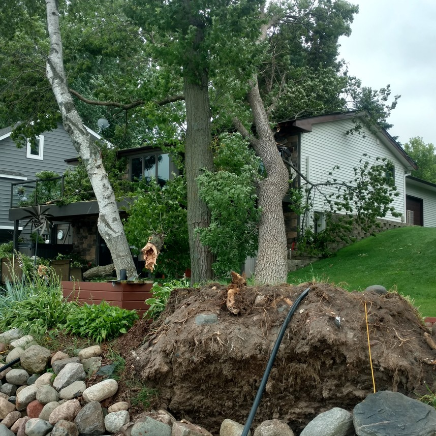 Storm Damaged Tree | Cabling and Bracing Trees in Minnesota