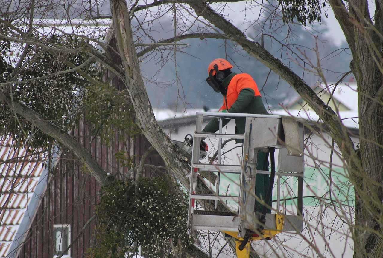 Tree trimming services in the Twin Cities.