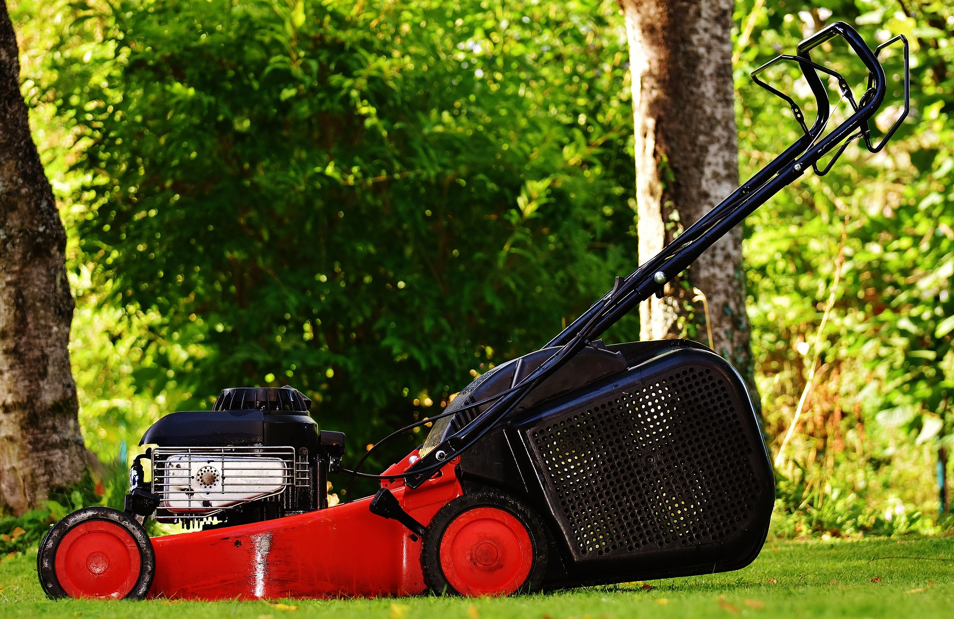 Lawn Mower Overhaul : How to know when your tree is dying tips