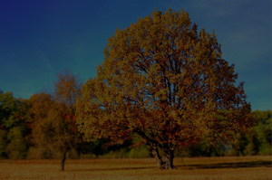 8 Steps for Planting a Tree | Precision Tree Service MN